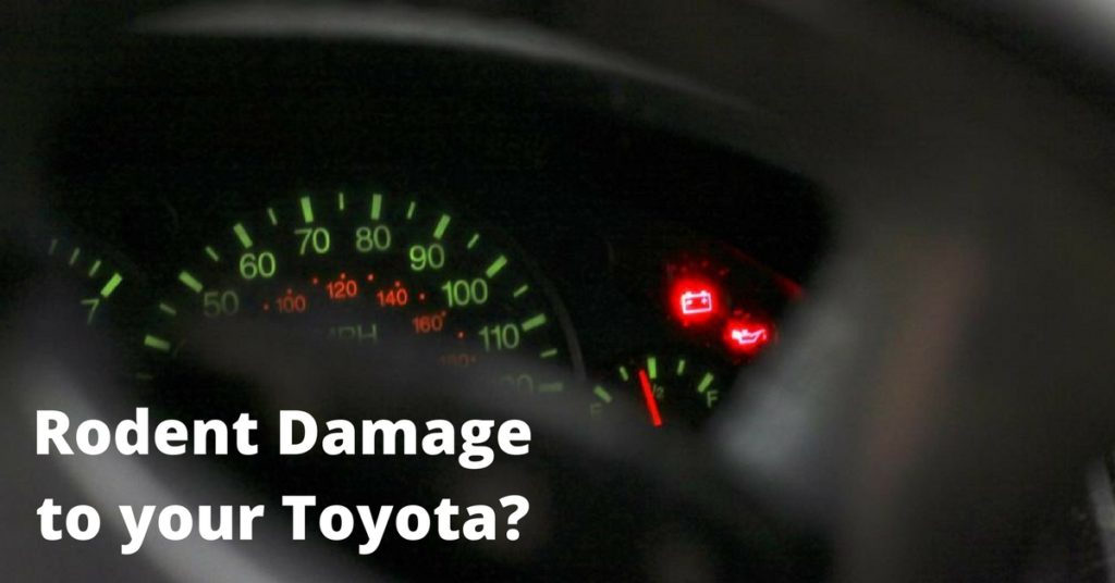 Rodent Damage 1 1024x536 toyota rodent damage class action emerson firm, pllc